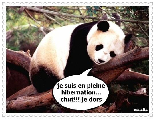 Hibernation  panda